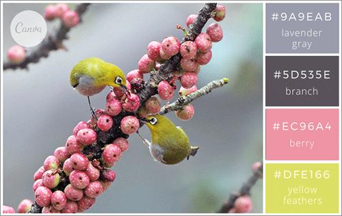 自然にインスパイアされた色の組み合わせ