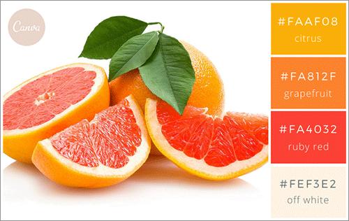 食べ物・飲み物にインスパイアされた色の組み合わせ