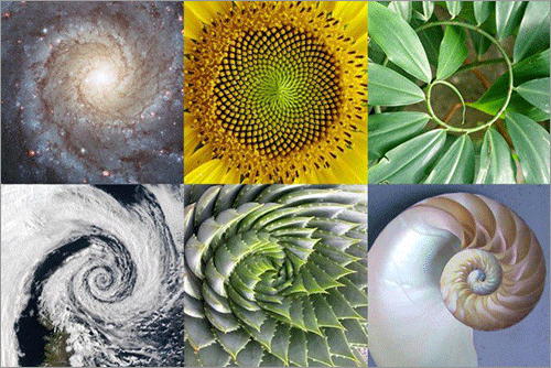 自然界の黄金螺旋
