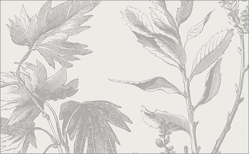 葉っぱや小枝の素材