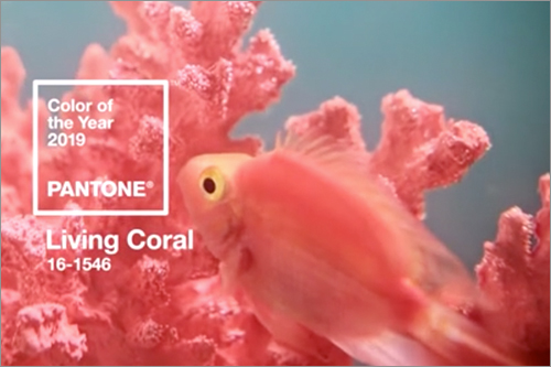 2019年の流行色・トレンドカラーはかわいい珊瑚色「Living Coral」